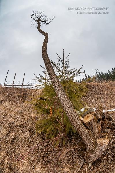 Giant tree by gabymarian