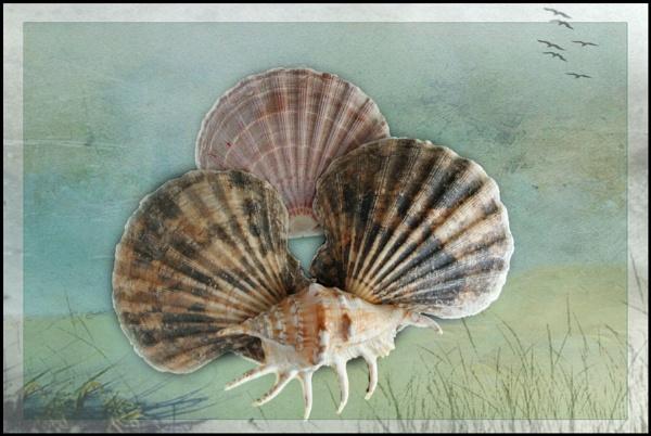 Shells by Bonvilston