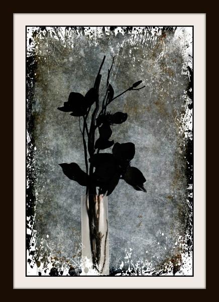 Gothic Black by Bonvilston