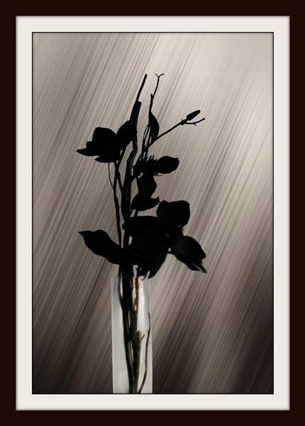 Black by Bonvilston
