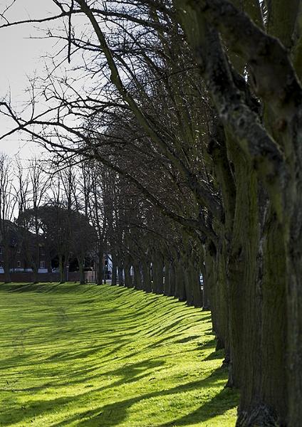 Tree Line and Shadows by jadedhills