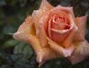 Reminder of summer Orange bloom