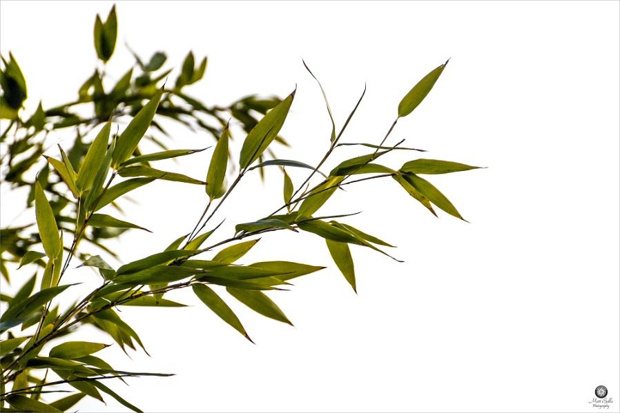 Just Bamboo