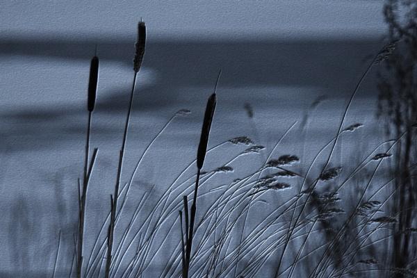Whispering Grass by fandangofandingo