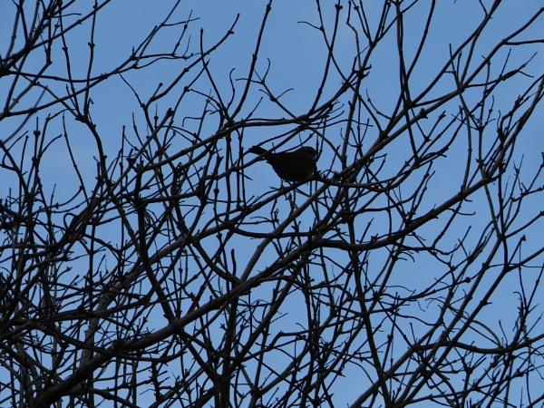 Bird.. by bictonbabe12