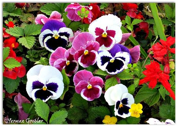Happy Flowers by Hermanus
