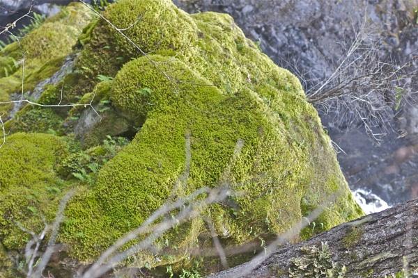 Moss blanket by Hercules