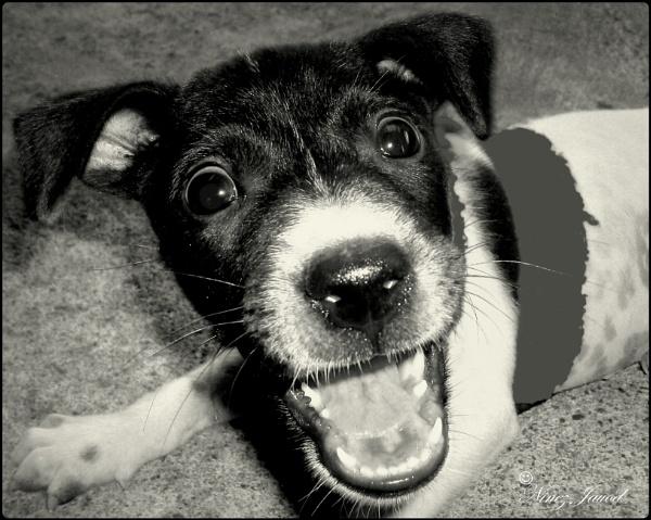 Happy Puppy by 9z