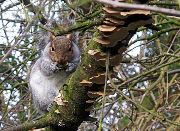 Squirrel High on Magic Mushrooms by susanbarton