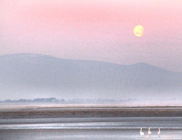 New Dawn by aliciabeesley