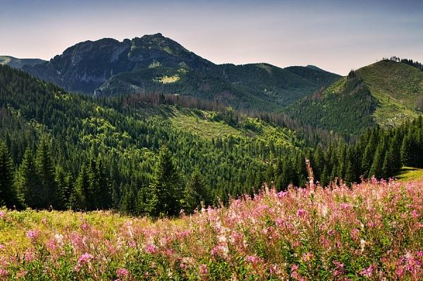 Przyslop Mietusi, Tatra Mountains, Poland by bart_hoga
