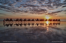''Camels at Cable Beach Broome WA''