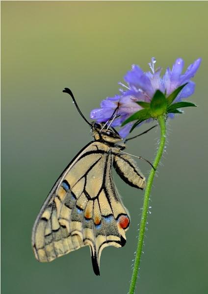 nice flower by ruurd