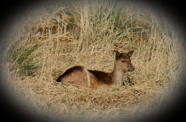 Hi i\'m not bambi by SNAPPYCHAPPY