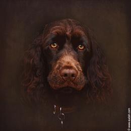 Charlie - The Portrait