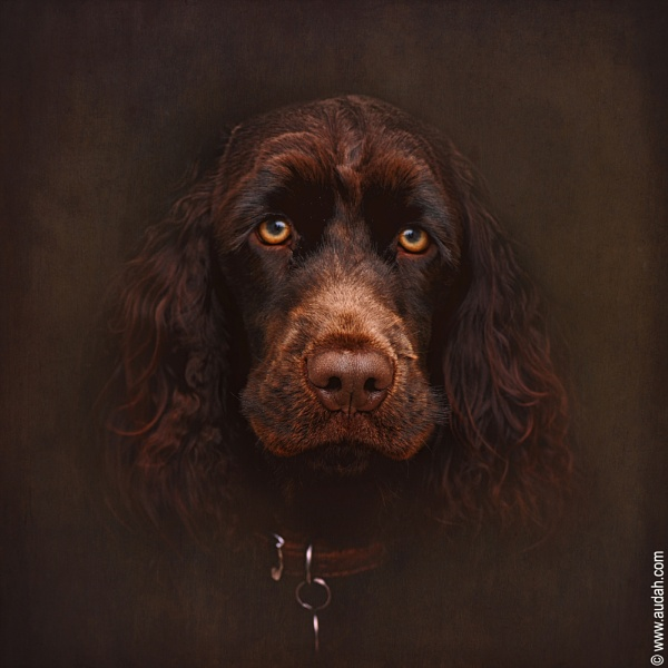 Charlie - The Portrait by ading