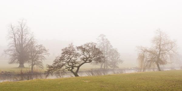 Mist it the Park