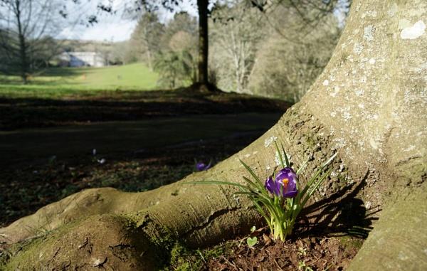 Spring Signs by MuresMaria