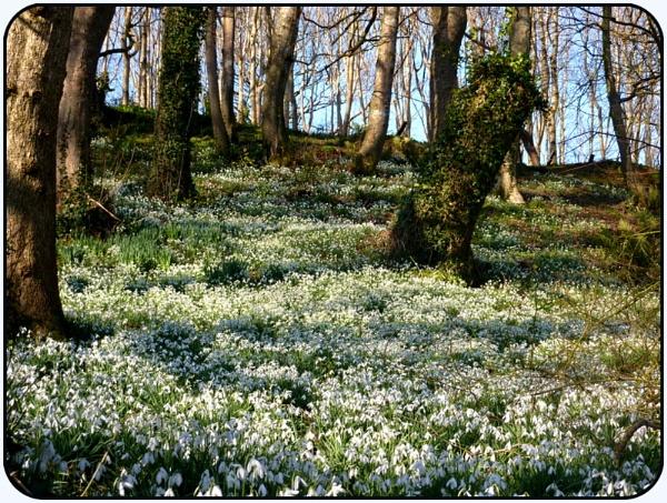 Spring Carpet by netta1234