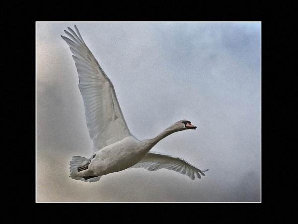 Swansong by JohnAStevens