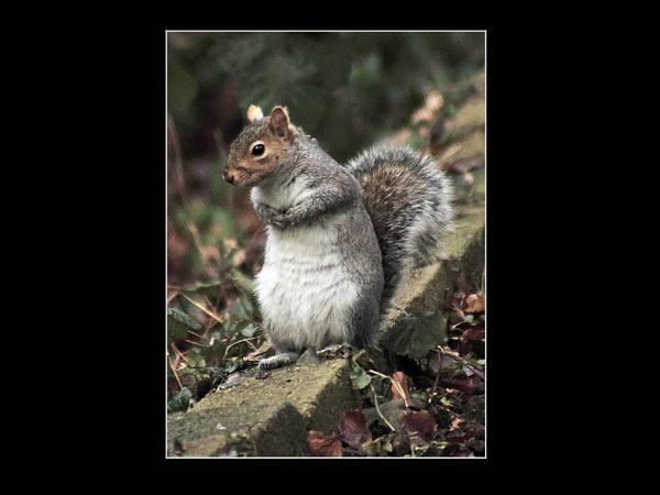 Senior Moment-Where\'s my nuts by JohnAStevens