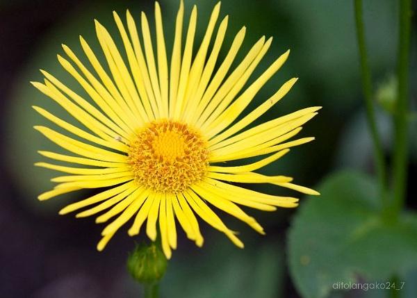 flower power by anjoedanas