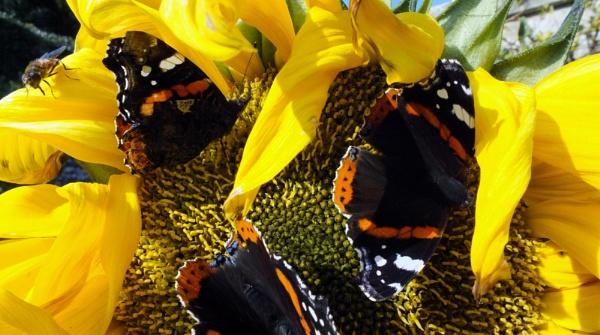 butterfly heaven by kevlense