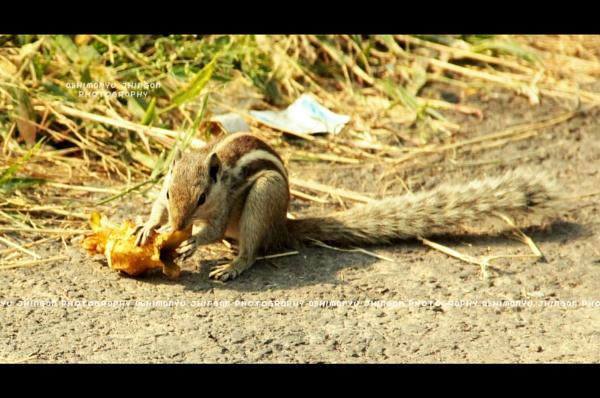 Hungry Chipmunk.. by abhi2306