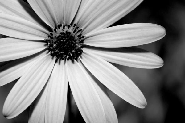 Flower by garganulka