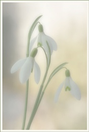 Softly softly comes the spring