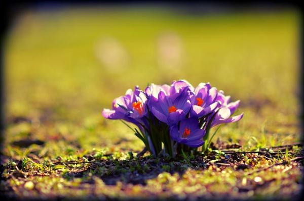spring by emwestgatejones