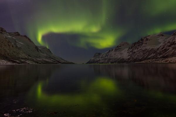 Aurora Borealis - Ersfjordbotn Norway by Bucksnaturetog