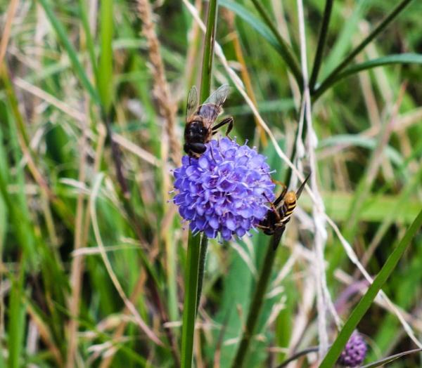 Bumble Bee by Bingsblueprint
