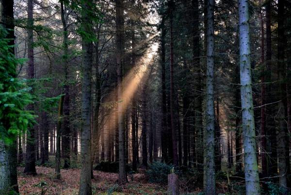 Shaft of light by kojak