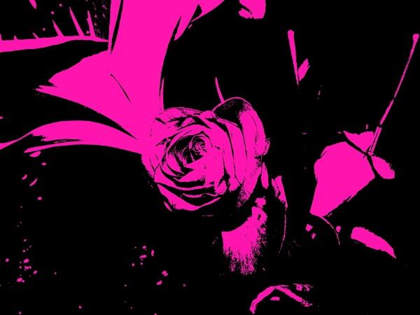 Pop art Rose by Mr_Squirrel