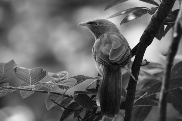 b/w wild bird by somil