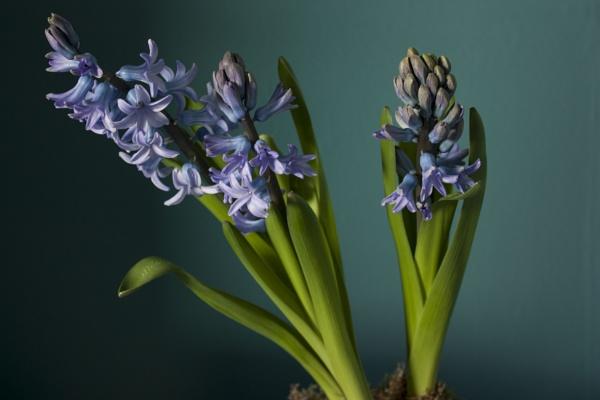 soul of spring by Sigita