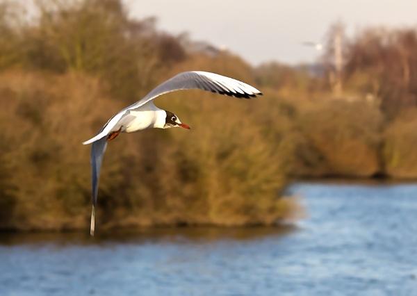 Free as a bird by chrisheathcote