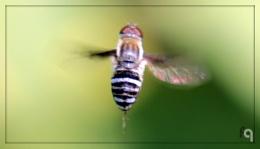 Motion in Flight