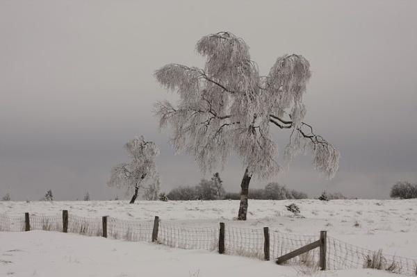 Winter wonderland.... by lionking