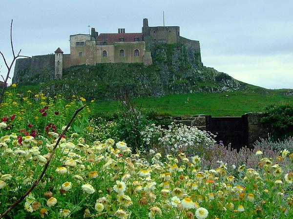 Lindisfarne  Castle  from  Gertrude  Jekyll\'s  garden by pantheonrider