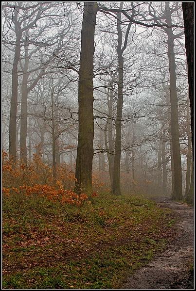 On a Foggy Day by fentiger