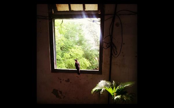 THE CROW ON MY WINDOW by shailyrawat