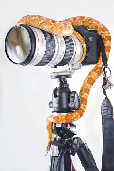 Camera snake by cat001