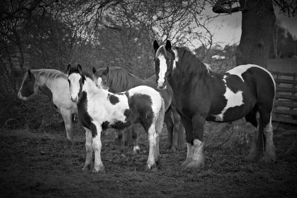 Horses by tynetoons