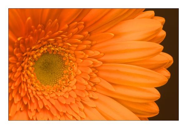 Orange today by EddyG