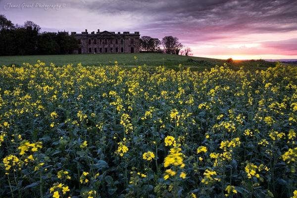Sutton Scarsdale Rape Seed Field by jamesgrant