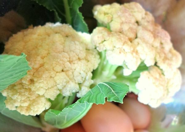 Veggie lunch... by meniko