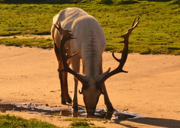Thirsty... by Lottiephotography