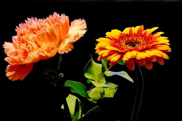 Virág-Pár by wacrizphoto